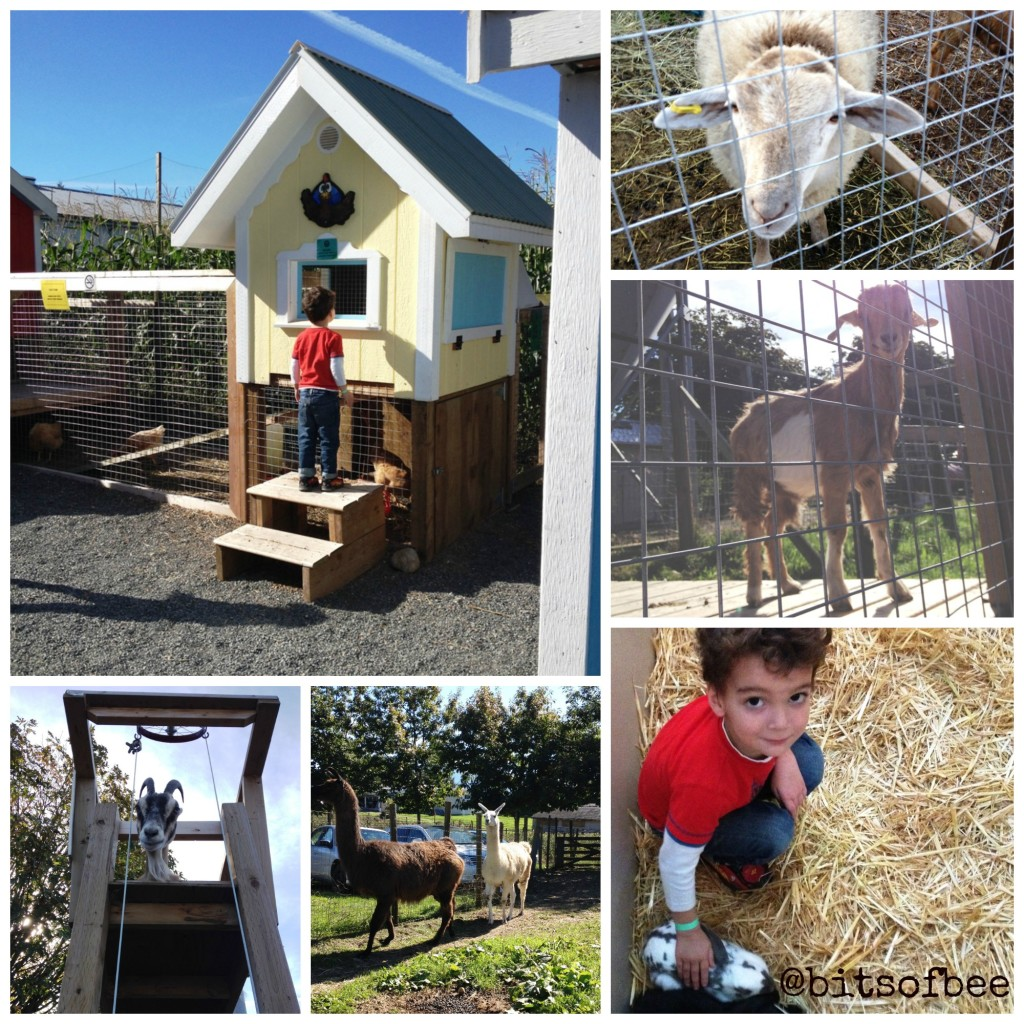 Taves Farm - Animals