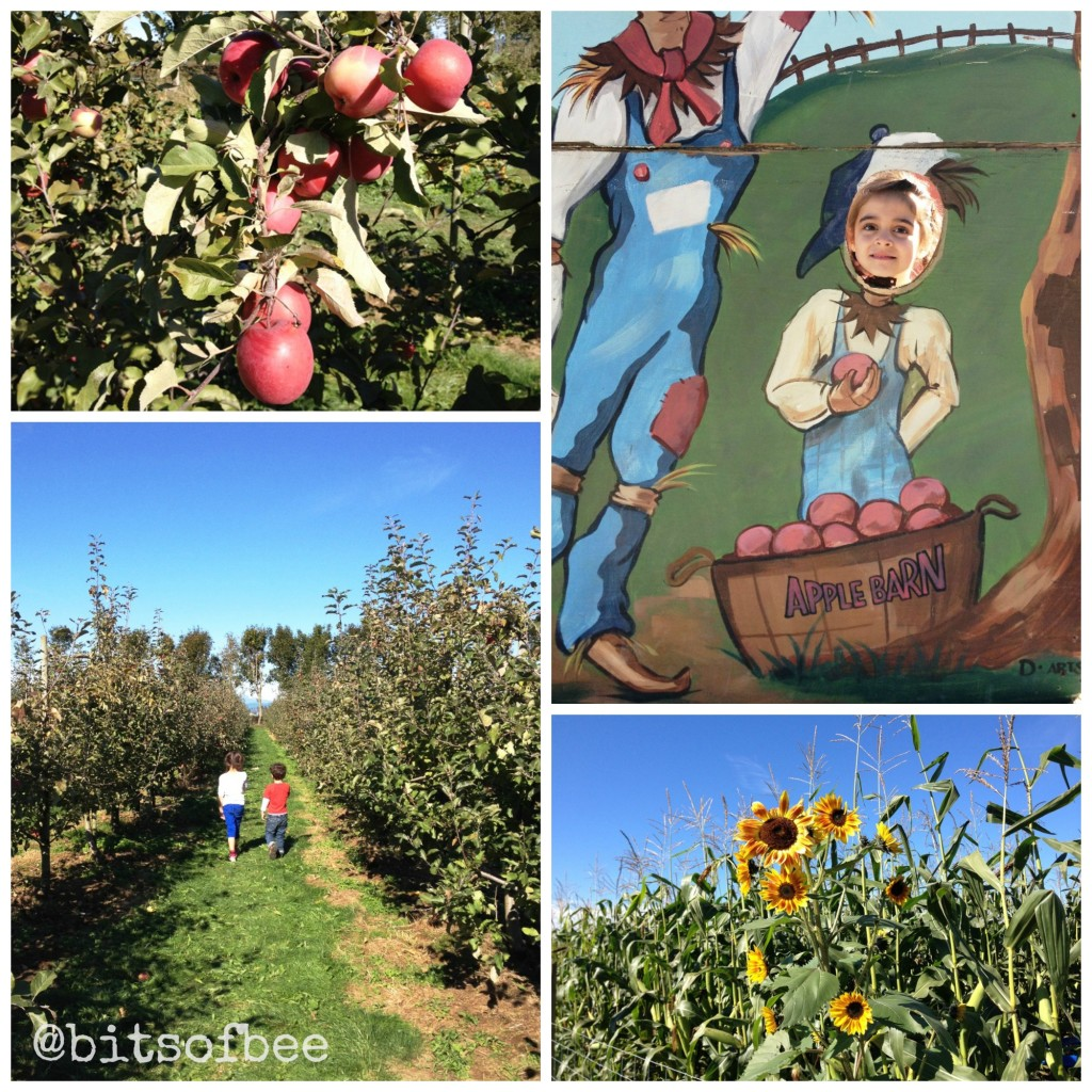 Taves Farm - Apple Picking