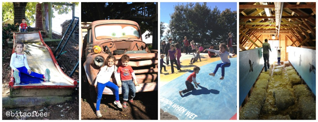 Taves Farm - Kid Activities