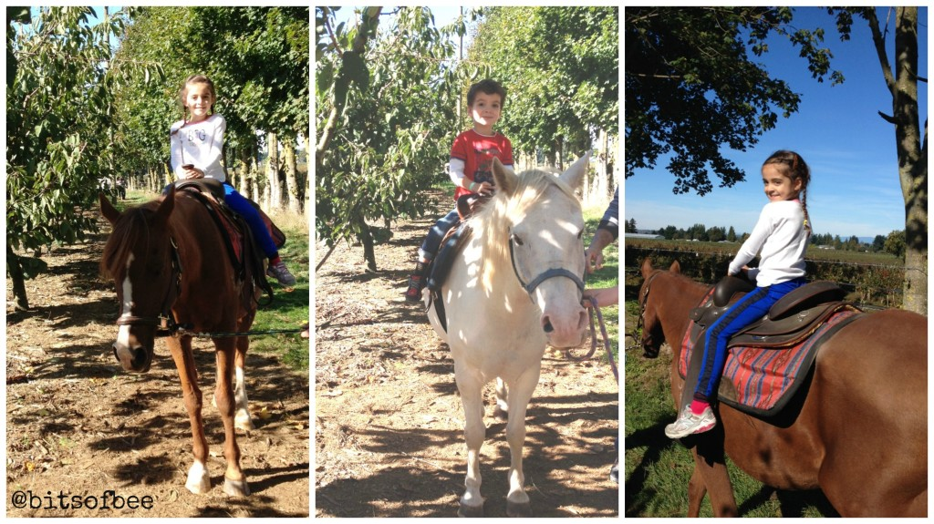 Taves Farm - Pony Rides