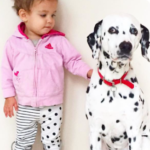 {FAMILY} 5 Things To Consider Before You Get A Family Pet